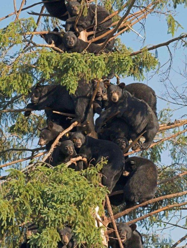 Место, где появляются все медведи