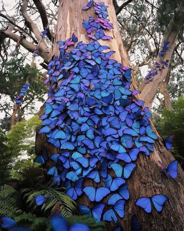 Дерево, которое облюбовали синие бабочки