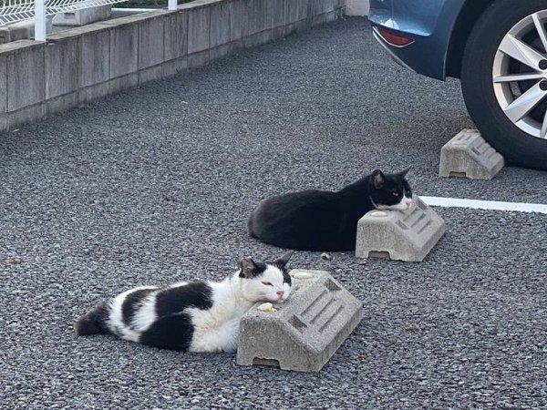 Обычные японские коты на отдыхе