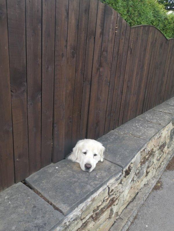 Пёс в заборе