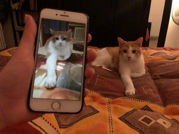 Листала в Фейсбуке фото кошек и обнаружила глюк в матрице