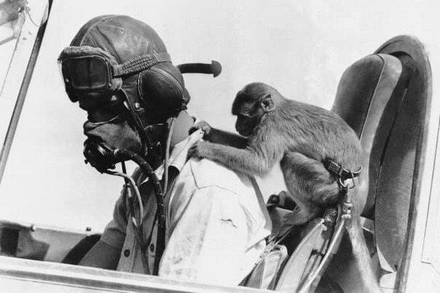 Талисман эскадрильи Королевских ВВС Великобритании в Ливии: обезьяна по кличке Бас играет с пилотом истребителя «Tomahawk» в Западной пустыне, 15 февраля 1942 года.