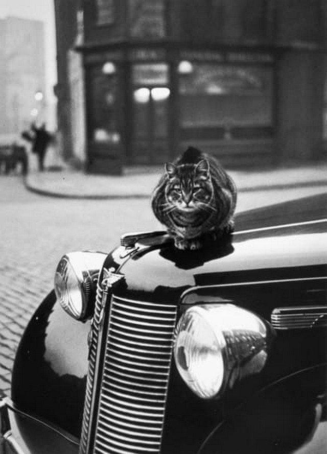 Кот на машине. Лондон, 1950-е.