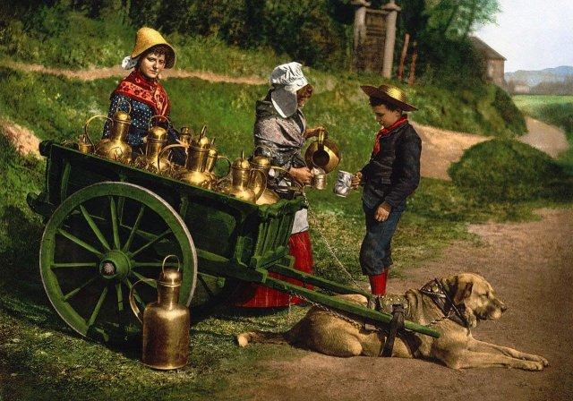 Уличные торговцы молоком. Бельгия, 1890 год.