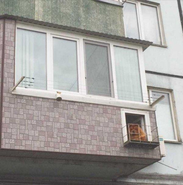 У чау-чау есть свой балкон