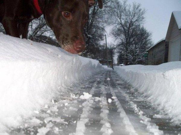 Гигантская собака бродит по только что почищенной улице
