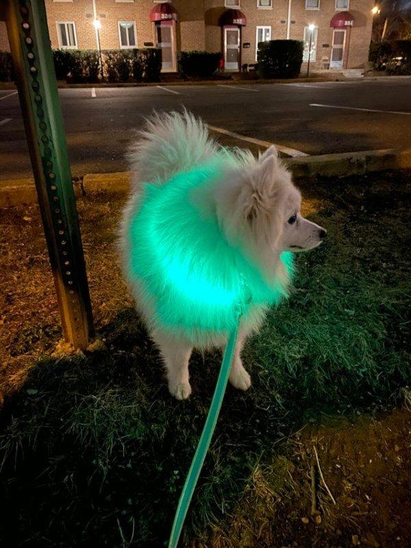 Светящийся ошейник для собаки. И стильно, и питомец не потеряется из виду
