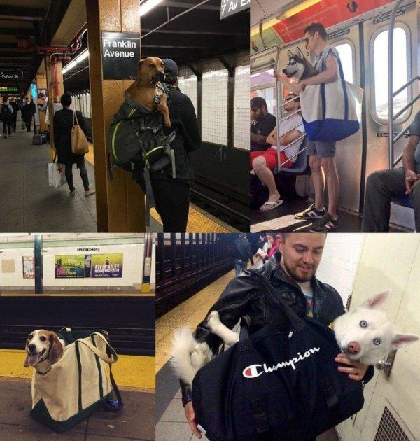 Появилось правило: «В метро могут ездить только те собачки, которые помещаются в сумку»