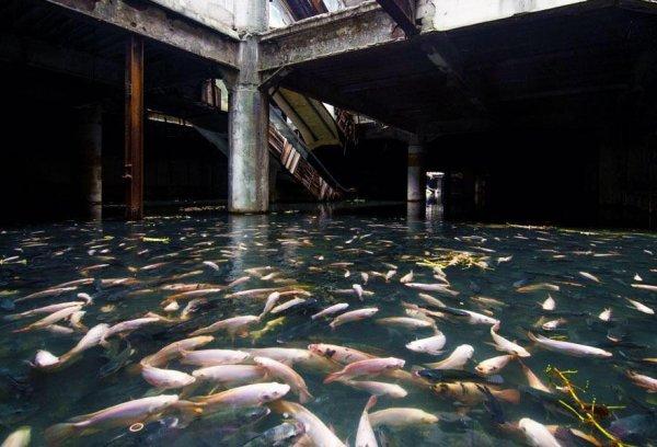 Торговый центр в Бангкоке, который затопило ливнями, и там завелись рыбы