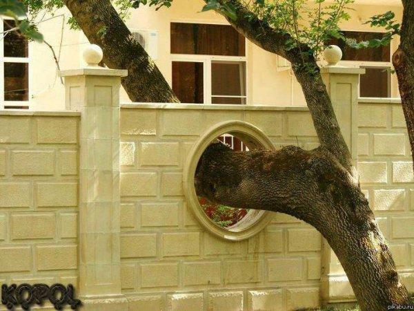 Ещё одно необычное архитектурное решение для спасения дерева