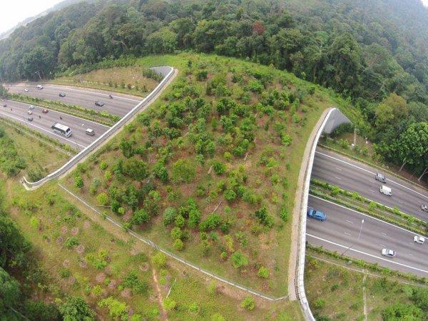Мост в Сингапуре помогает животным безопасно перебегать дорогу