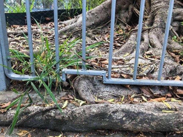 Чтобы не срезать корень дерева, здесь просто поменяли конструкцию забора