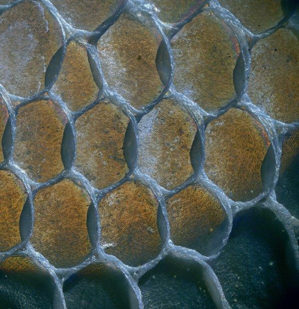 Защитное плетение на шкуре ящерицы