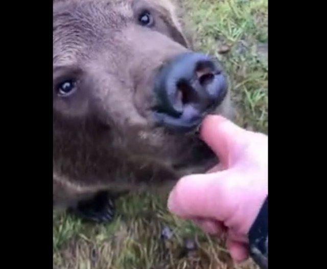 Очень добрый и забавный медведь