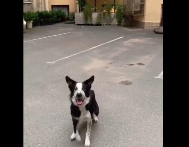 Очень умная собака, которая умеет позировать