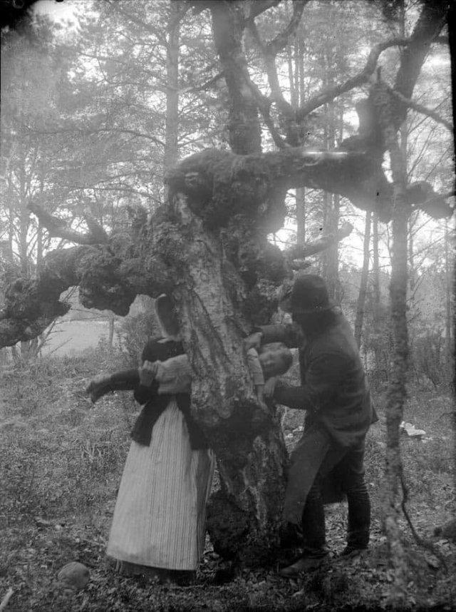 Попытка исцелить ребенка–рахитика путем протаскивания через дупло в целебном дереве, 1918 год, Швеция.