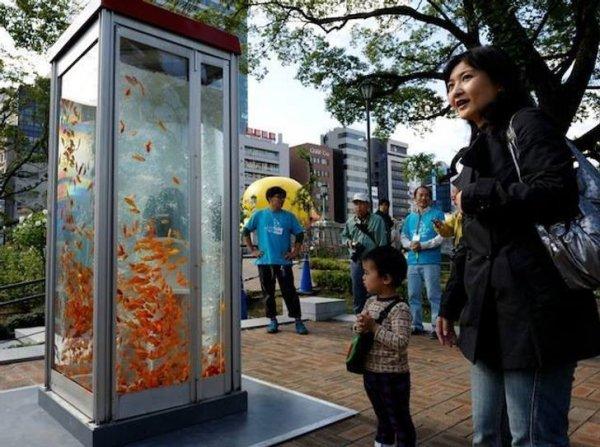 В Японии из старых телефонных будок сделали красочные аквариумы