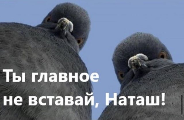 Шутки и мемы с голубями, которые напоминают начальников