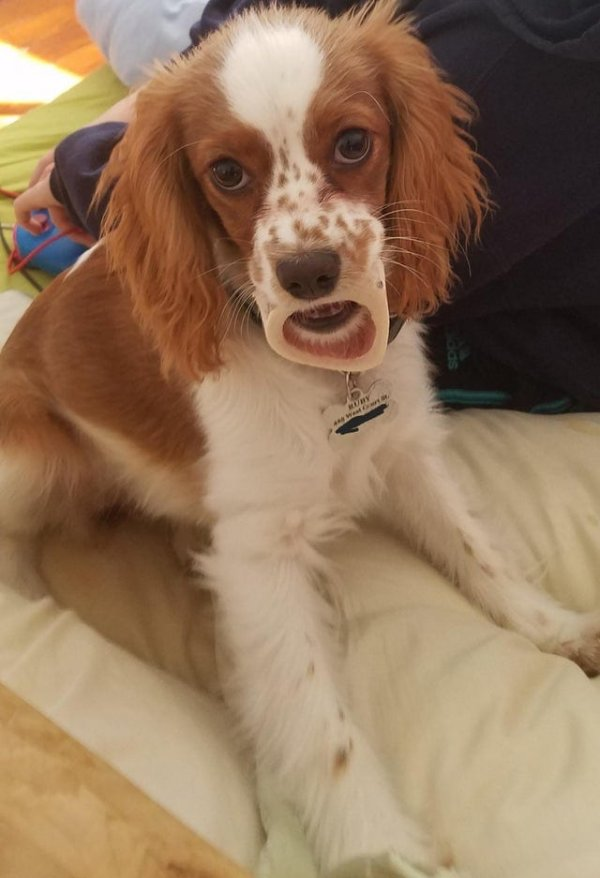 Пес держит косточку, а вы что подумали?