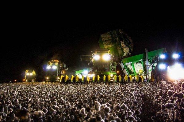 Сбор хлопка или рок-концерт?