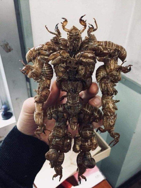 Существо, собранное целиком из панцирей цикад