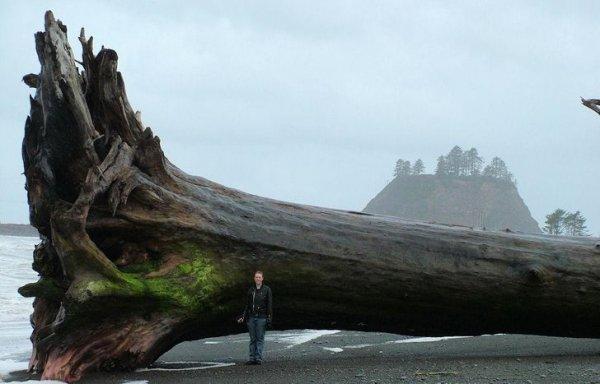 Иногда среди песка попадаются кусочки дерева
