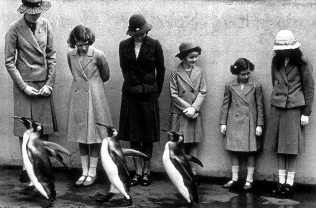 Королевские пингвины маршируют перед королевской семьёй в Лондонском зоопарке, Великобритания, 1938 год.