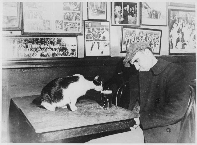 Посетитель бара Sammy's Bowery Follies спит за столиком, в то время как кошка пьет его пиво. Вашингтон, округ Колумбия, 1947 год.