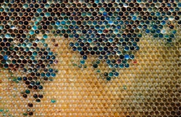 В 2012 году французские пчеловоды не могли разгадать тайну синего и зелёного меда в своих ульях