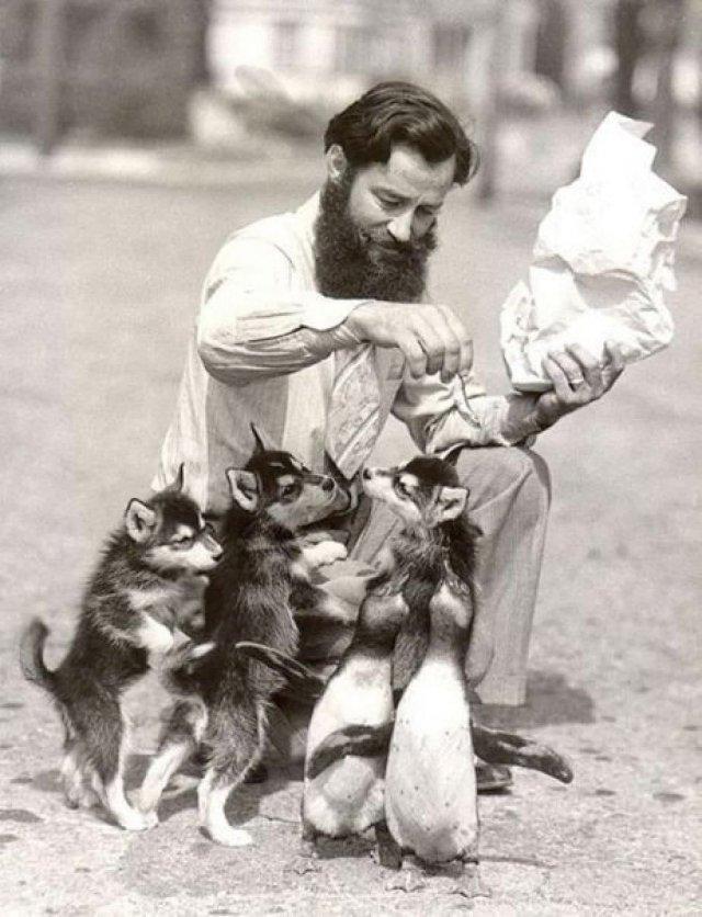 Мужчина кормит пингвинят и щенков.