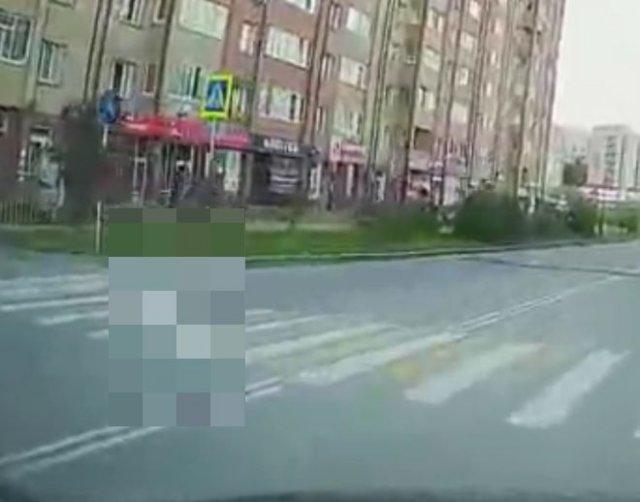 """Важный """"пешеход"""", которому нельзя не уступить"""