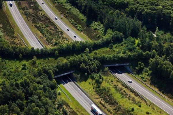 Экодук над шоссе A1 в Нидерландах