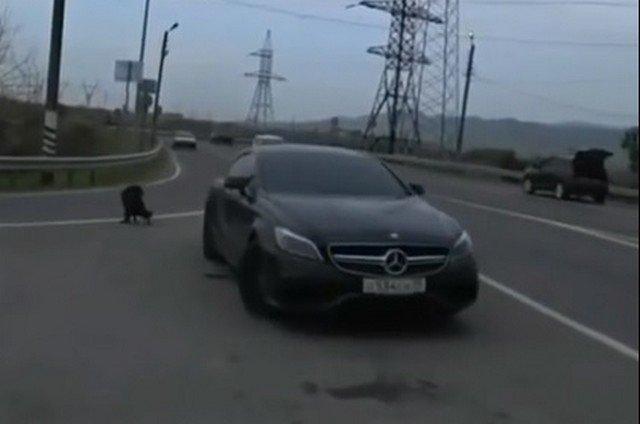 Последователи Эдварда Била из Чечни, устроившие гонки с полицейскими
