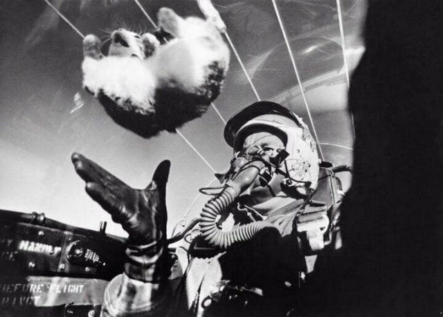 Пилот выполняет опыт по изучению действия невесомости на кошке, 1958 год.