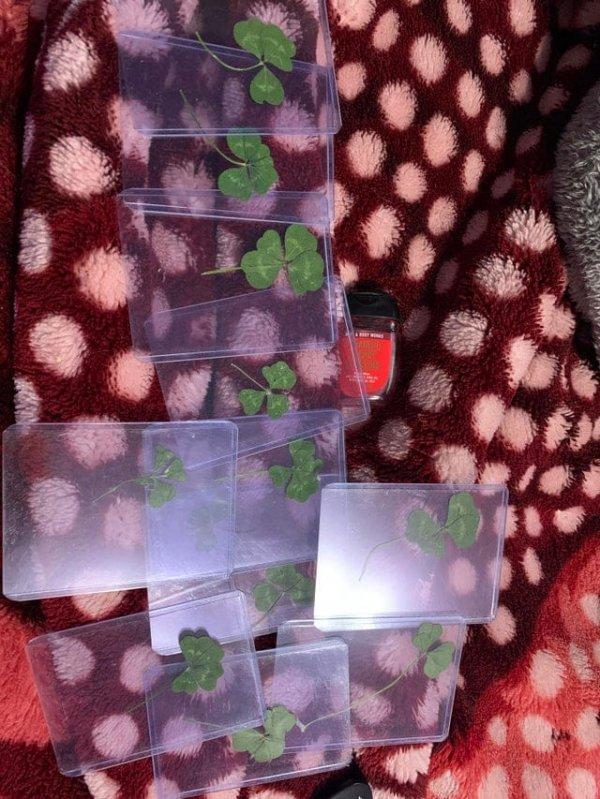 Я нашёл 12 четырёх-пятилистных клеверов