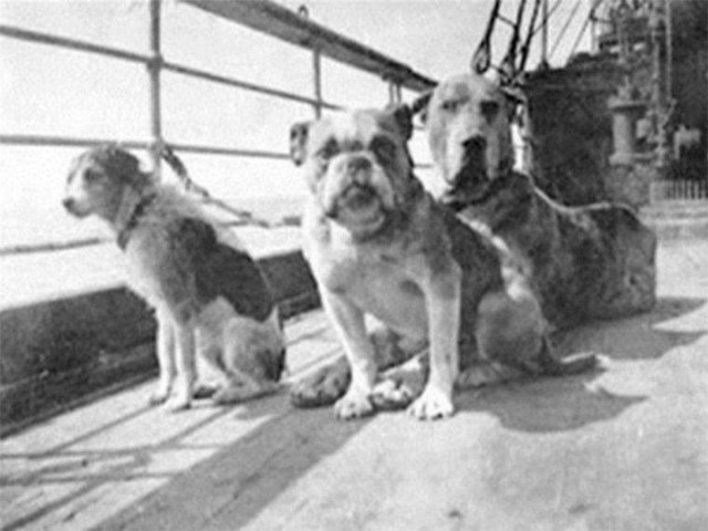 Собаки, пережившие крушение Титаника. На борту было 12 собак, но выжить удалось только трем. 1912 год.