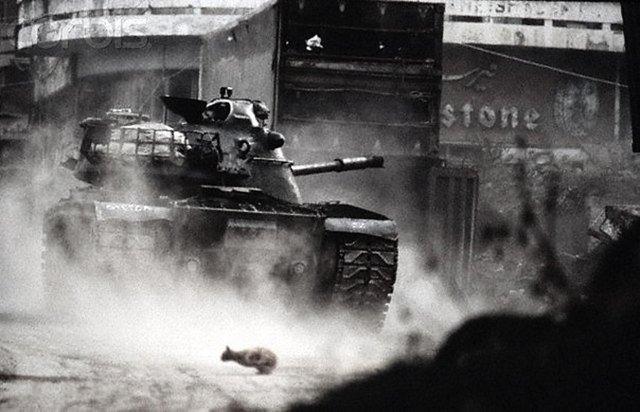 Кот перебегает через улицу во время уличного боя в Бейруте, Ливан, 1980-е