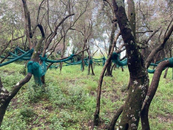 Что это за синие сетки, подвешенные между деревьями?