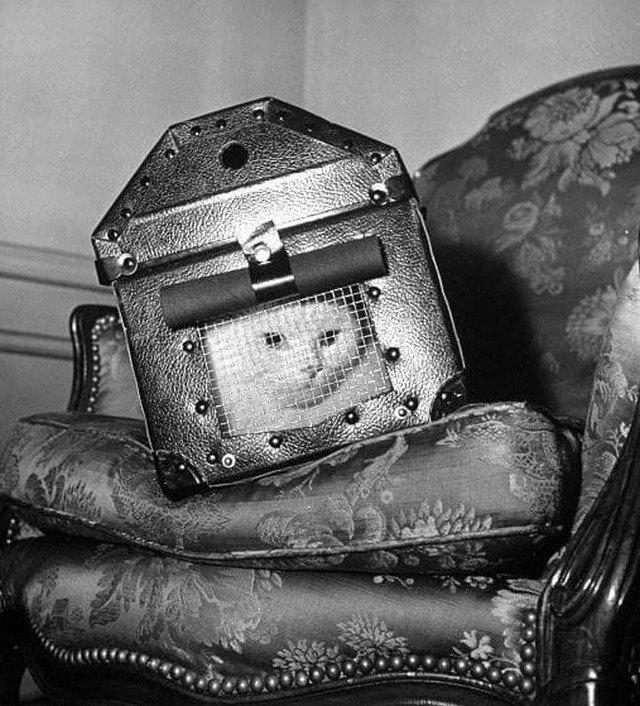 Контейнер из сверхпрочной стали для безопасной транспортировки кошек во время бомбёжек, Англия, 1941 год.