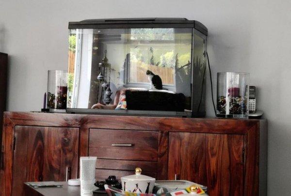 Отражение кота создает иллюзию, будто он находится в аквариуме
