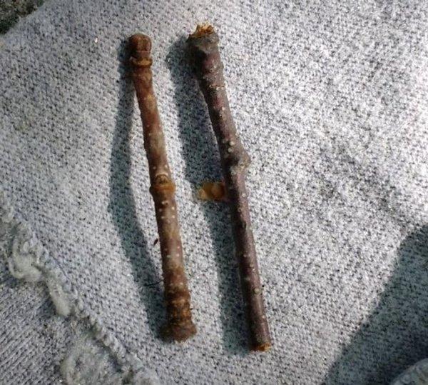 Одна из них — палочка, а вторая — личинка мотылька