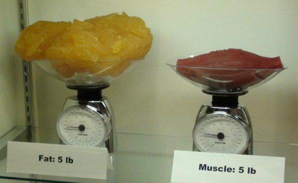 5 фунтов жира и 5 фунтов мышц