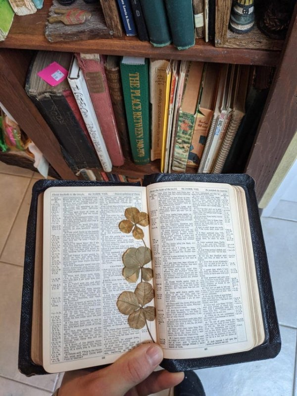 Нашёл в антикварном магазине Библию, в которую вложен четырёхлистный клевер
