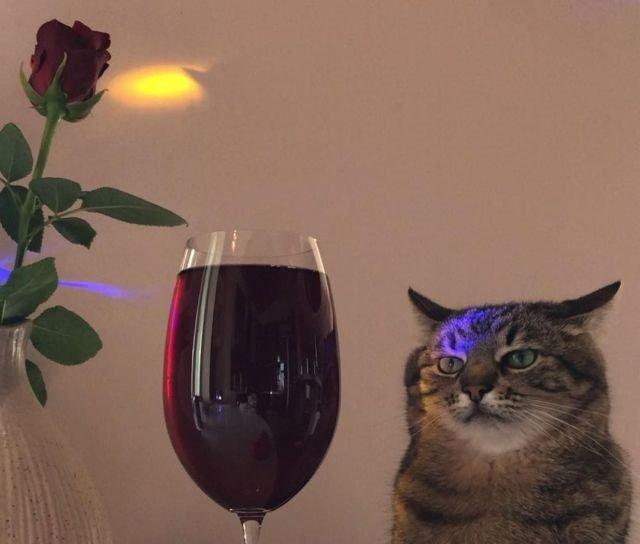 Кот Степан - новый герой соцсетей: грустный кот, в котором любой узнает себя