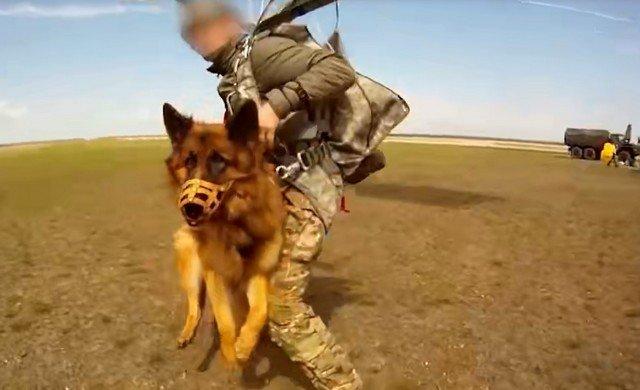"""""""Ростех"""" показал подвесную парашютную систему для собак"""