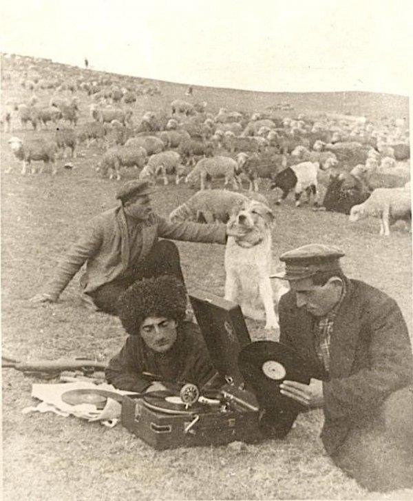 Пастухи слушают музыку