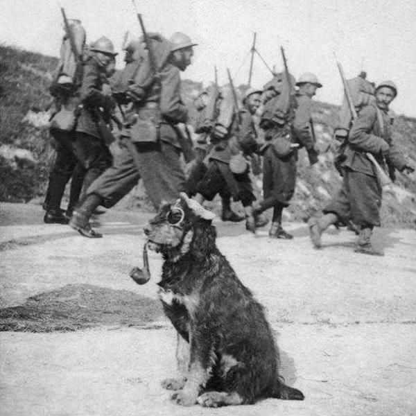Французские солдаты проходят мимо пса с трубкой, 1915 год