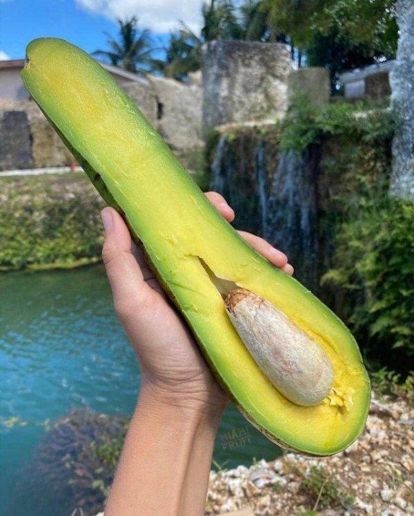 Разве бывают такие авокадо?