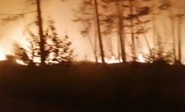 Челябинске пожарные спасли из огня маленького олененка