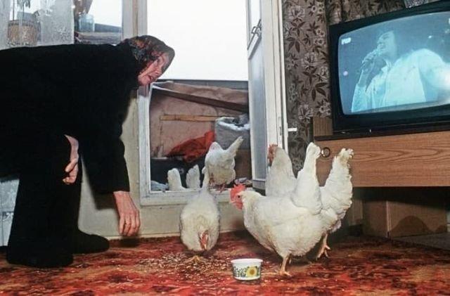 Женщина разводит куриц на мясо в своей квартире на пятом этаже, Москва или Подмосковье, 12 февраля 1994 год.
